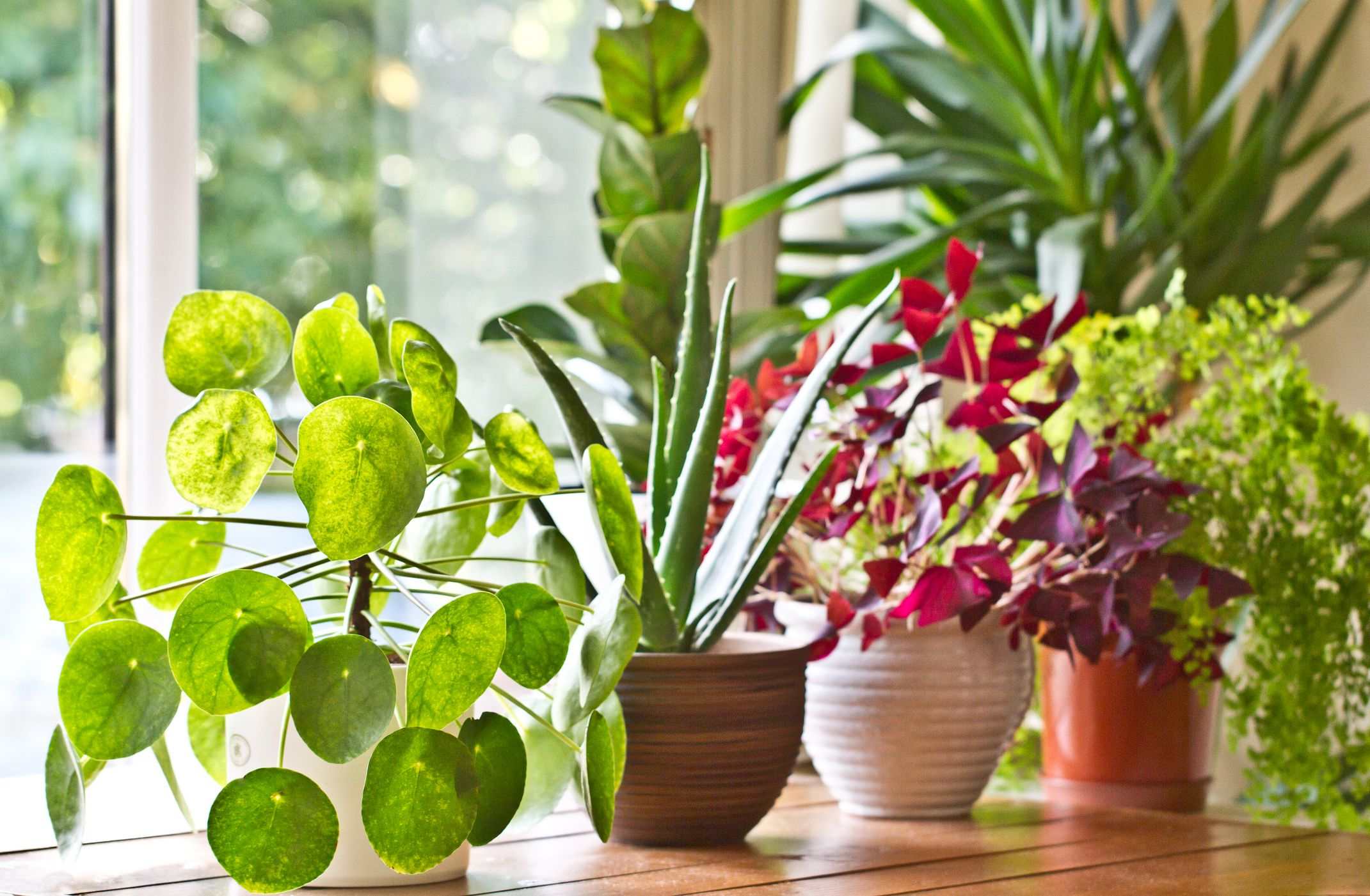 10 Indoor Plants Which Are Considered As The Best Home Decor